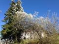 Frühling in der Nähe vom Lusenschutzhaus